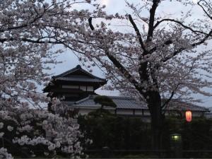 市川の桜その④ 昭和学院のお茶室をバックに!
